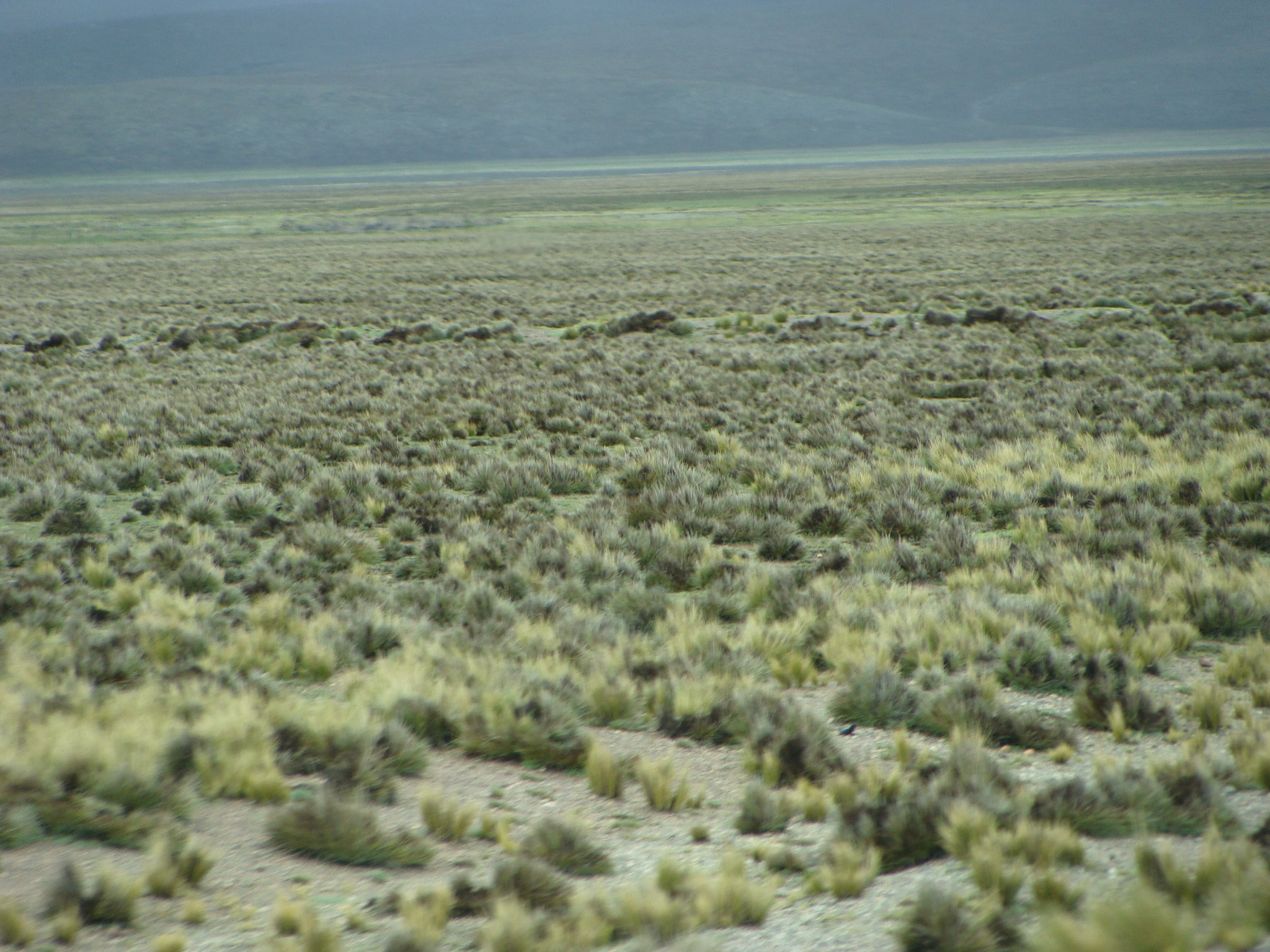 Na cestě do Arequipy - peruanská Pampa dne 19. 2. 2011 12:58