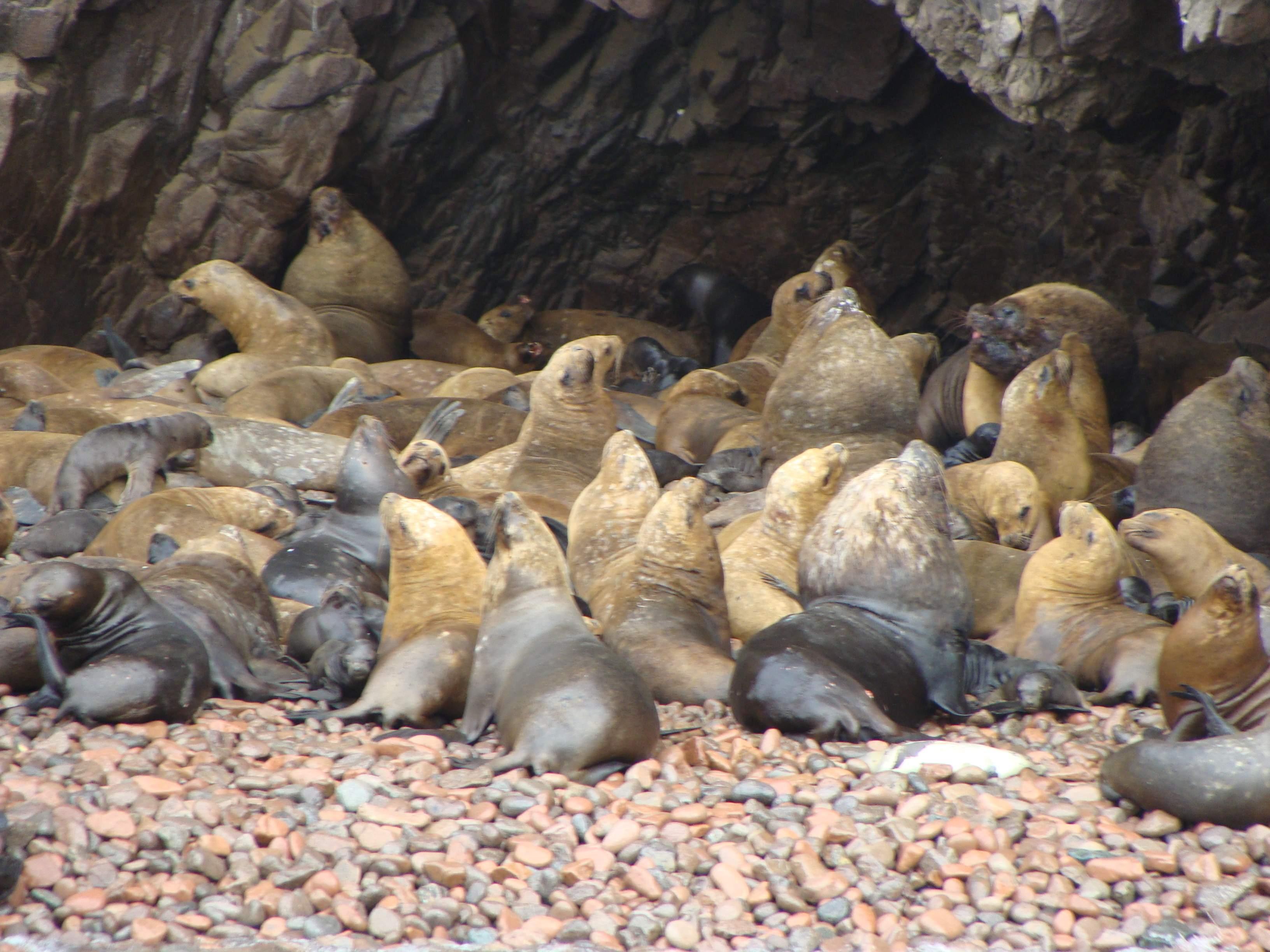 Národní rezervace Islas Balestas 22. 2. 2011